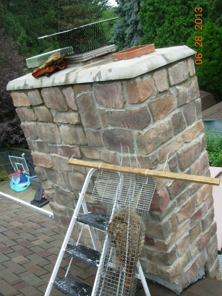 Raccoon Removal Chimney How To Akron Canton Oh Area