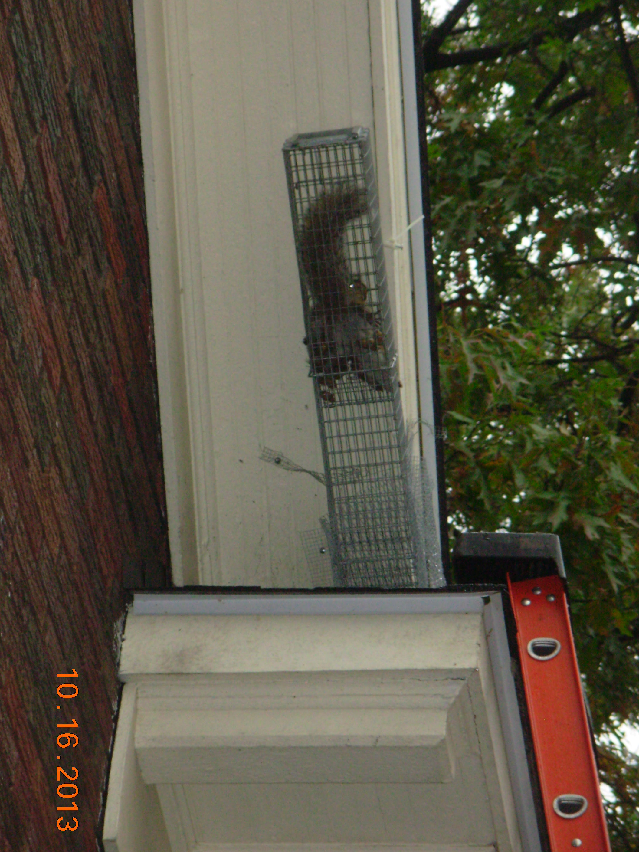 squirrel in trap highland square