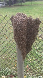 Akron Canton Kent Honey Bee Removal
