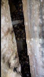 Ohio Bat Laws | Protection for Bats | Bat Pros Akron, Canton